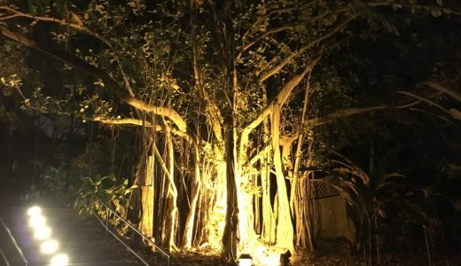 シンガポール植物園:世界遺産の夜景は観光におすすめなのか?
