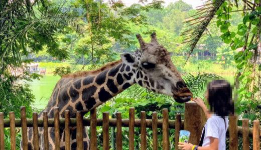 オーチャード → シンガポール動物園 電車での行き方