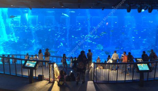 世界最大級の水族館!シーアクアリウムに行ってみた感想